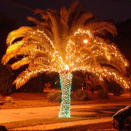 Christmas-Tree-715400
