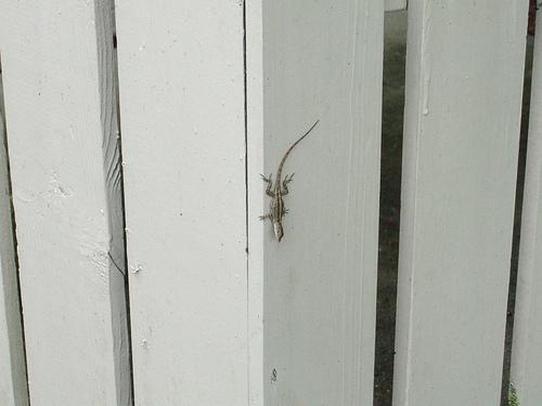 hello-gecko