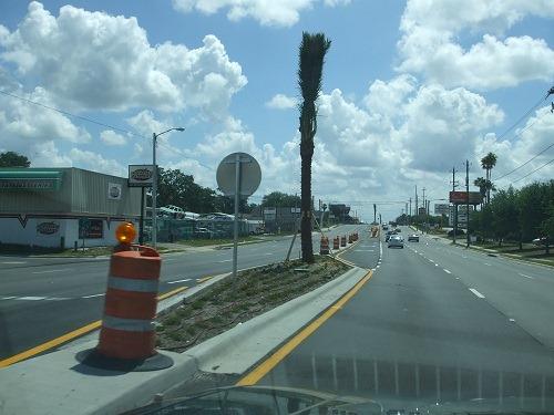 newly planted palm tree
